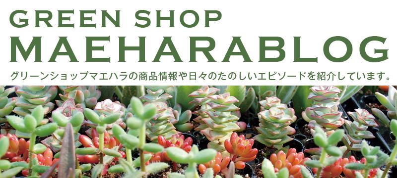 GREEN SHOP MAEHARABLOG